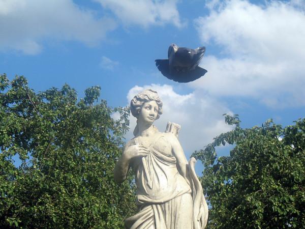 Голубь в Казанском саду