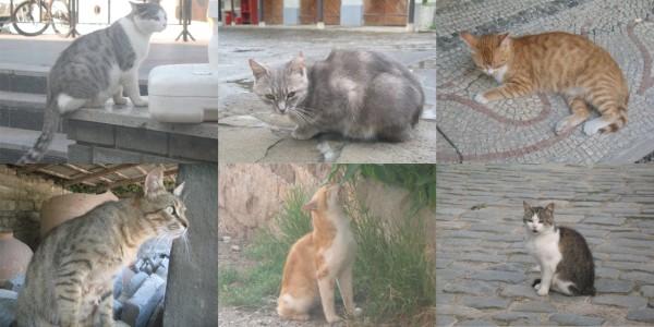 Кошки в Севастополе