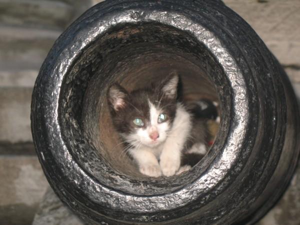 Кошки и коты в Севастополе