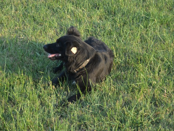 Собаки в Севастополе