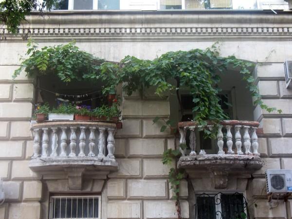 Зеленые балконы Севастополя