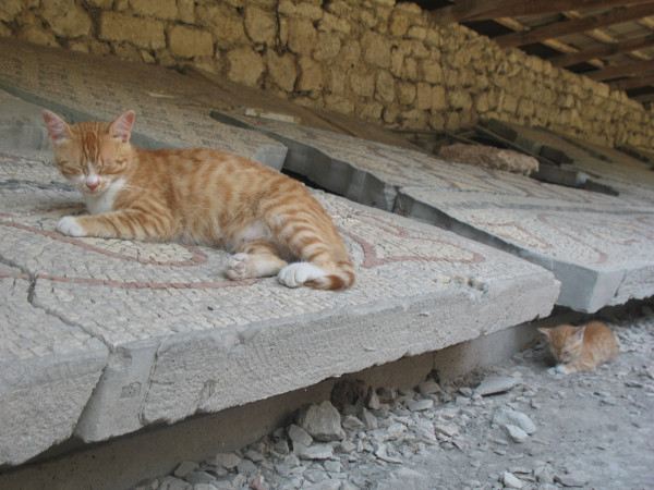 Севастопольские коты