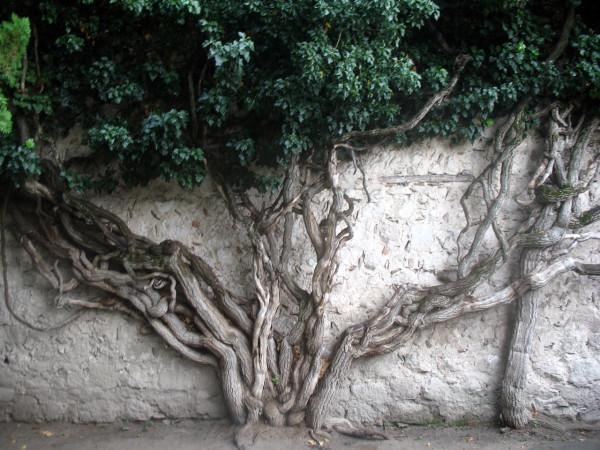 Дерево в ханском дворце