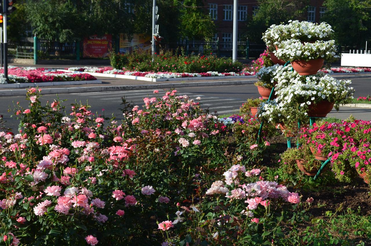 Цветы на вернадском проспекте