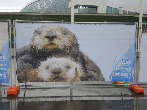 Смешное на Олимпиаде в Сочи